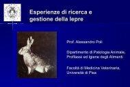 Relazione Poli - Provincia di Pisa