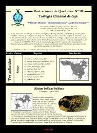 en baja resolución - Reptilia