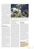 bioattualità 4/09 - bioattualita.ch - Page 5