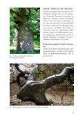 Klik her - Dansk Dendrologisk Forening - Page 4