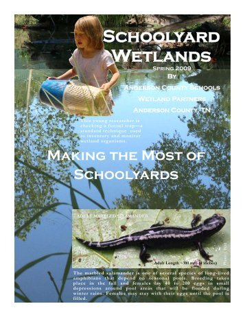 Wetland Newsletter - Center for Wetlands & Stream Restoration