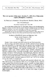 Two new species of the genus Aradus F., 1803, from Palaearctic ...