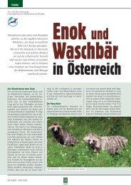 14 THEMA Der Waschbär Der Marderhund oder Enok - Enok und ...