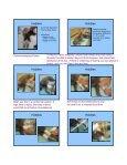 SLINGS SLINGS Carpal Flexion Sling Carpal ... - CSU PVM 2014 - Page 3