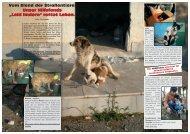 Seite 10-19 - Tierhilfe Süden eV