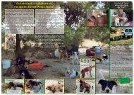 Seite 36-41 - Tierhilfe Süden eV