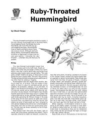 Hummingbird - New York State Envirothon
