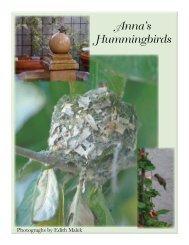 Hummingbirds 3.indd