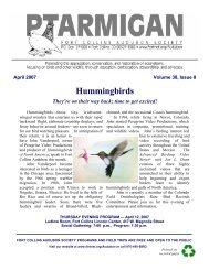 Hummingbirds - FortNet