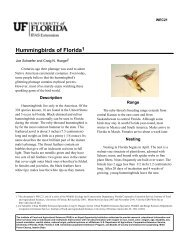 Hummingbirds of Florida1 - EDIS - University of Florida