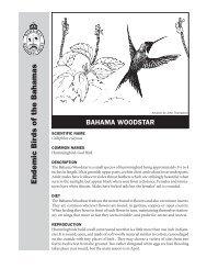Bahama Woodstar Hummingbird Fact Sheet - The Bahamas ...
