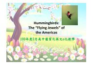 """Hummingbirds: The """"Flying Jewels"""" of the Americas"""