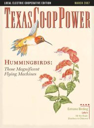 March: Hummingbirds: Those Magnificent Flying Machines
