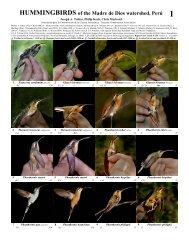 HUMMINGBIRDS of the Madre de Dios watershed, Perú