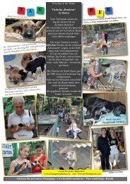In Alanya - Tierhilfe Süden eV