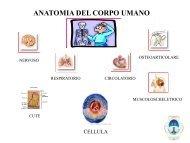 Cenni Anatomia Umana e Principali Patologie - Fraternita di ...