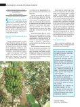 Integração lavoura-pecuária-floresta – Convivência harmônica - Page 3