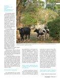 Integração lavoura-pecuária-floresta – Convivência harmônica - Page 4