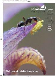 Nel mondo delle formiche - Pro Natura Ticino