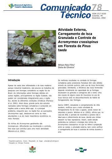 Praga: formiga - Embrapa Florestas