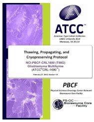 NCI-PBCF-CRL1690 (T98G) Glioblastoma Multiforme (ATCC CRL-1690 )