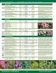 Broadleaf Evergreens - Mori Nurseries - Page 3