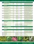 Broadleaf Evergreens - Mori Nurseries - Page 4