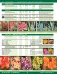 Broadleaf Evergreens - Mori Nurseries - Page 5