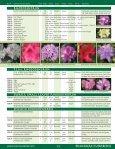 Broadleaf Evergreens - Mori Nurseries - Page 6