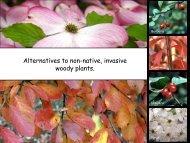 Alternatives to non-native, invasive woody plants.