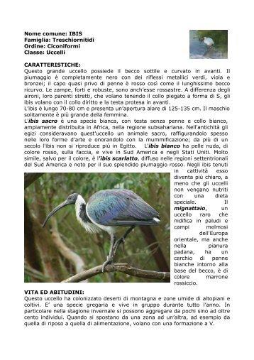 Nome comune: IBIS EREMITA (Inglese: bald ibis)