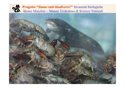 documento pdf 7MB - Museo Tridentino di Scienze Naturali