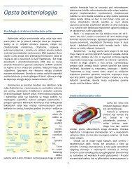 Mikrobiologija NS.pdf - Beli Mantil