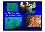 La biodiversità del Mediterraneo - Circolo Didattico G. Pascoli