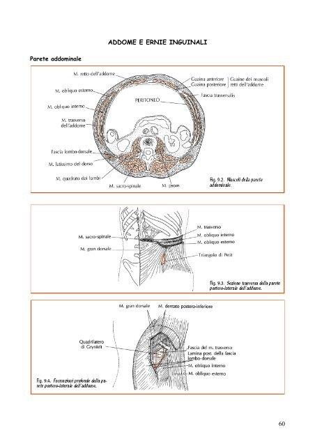 dolore nella parte inferiore delladdome e nella zona inguinale maschile