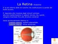 La Retina Anatomia