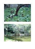 Cenote Xtokil - StoneWatch - Page 4