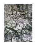 Cenote Xtokil - StoneWatch - Page 7