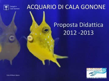 Offerta didattica 2012/2013 - Acquario di Cala Gonone