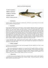 PESCE GATTO PUNTEGGIATO.pdf - Home | Ufficio Pesca della ...