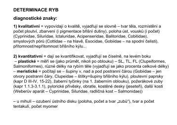 DETERMINACE RYB diagnostické znaky: 1) kvalitativní