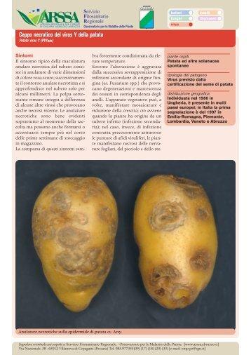 Ceppo necrotico del virus Y della patata - A.R.S.S.A. Abruzzo