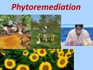 Phytoremediation: Identificazione dei geni coinvolti nell ... - Biologia