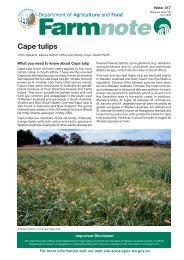 Cape tulips - Department of Agriculture and Food