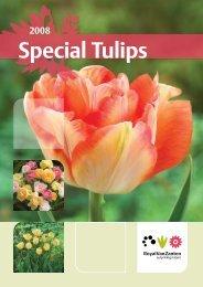 Special Tulips - Royal Van Zanten