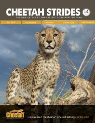 Issue No. 4 - September 2012 - Cheetah Conservation Fund