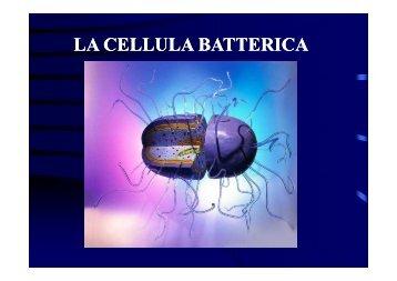 2 STRUTTURA CELLULA BATTERICA [modalità ... - Accento Sulla D