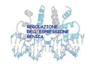 REGOLAZIONE DELL'ESPRESSIONE GENICA - biochimica