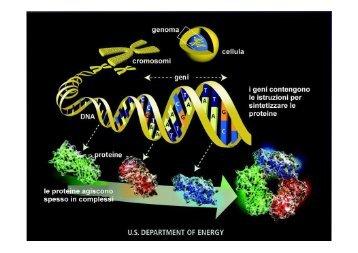proteine in breve