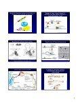 Meccanismi di regolazione dell'espressione genica e della ... - Page 5